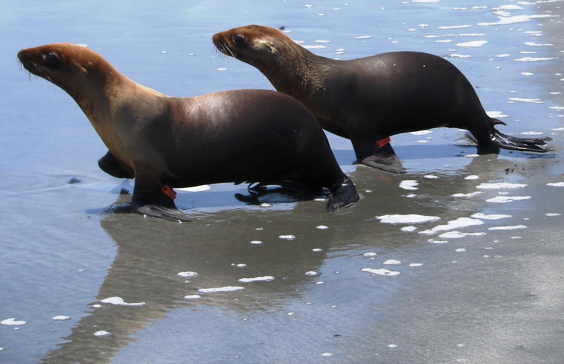 Fun Facts | Northcoast Marine Mammal Center