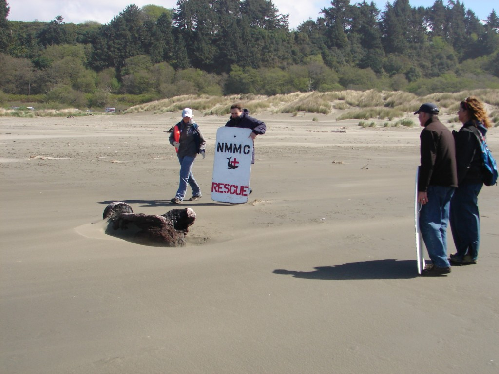 Janet, Cythia, and Dr Jeff Boehm, Marin Mammal Center approach seal for rescue